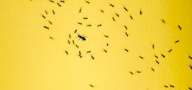 ameisen-gelber-hintergrund