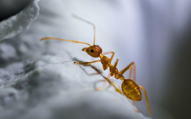 Schädlingsbekämpfung Heinsohn in Bremerhaven, Schädlingsbekämpfung Heinsohn aus Spaden, Kammerjäger in Bremerhaven, Ameisen im Haus bekämpfen, Ameisen im Haus vertreiben, Ameisen im Garten vertreiben, Ameisen im Wintergarten was tun, was kann man gegen Ameisen tun, Ameisen in der Wohnung, Ameisen bekämpfen